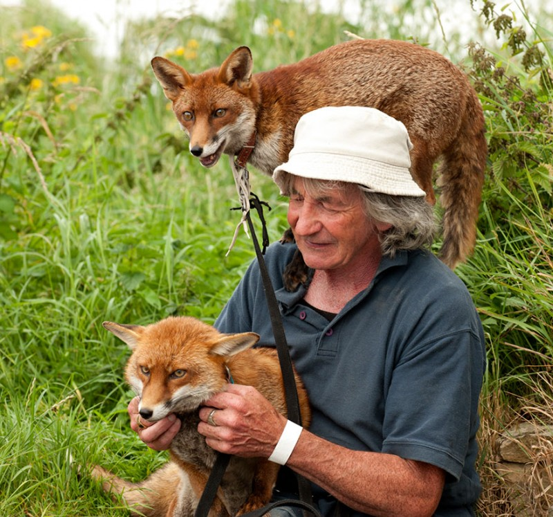 pet-foxes-rescue-relationship-between-human-animals (6)