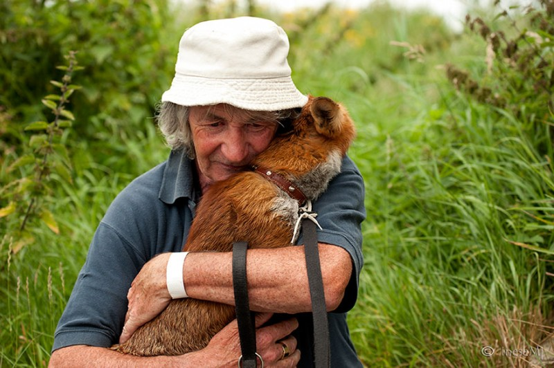 pet-foxes-rescue-relationship-between-human-animals (7)