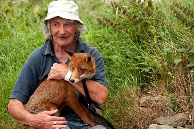 pet-foxes-rescue-relationship-between-human-animals (8)