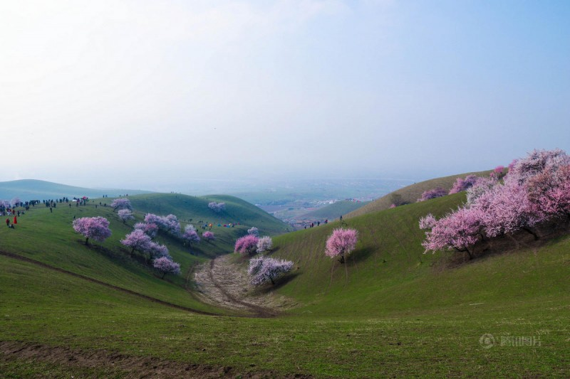 stunning-beautiful-blooming-apricot-valley-china-attractions (12)