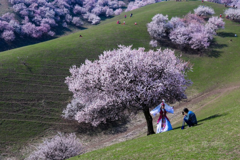 stunning-beautiful-blooming-apricot-valley-china-attractions (14)