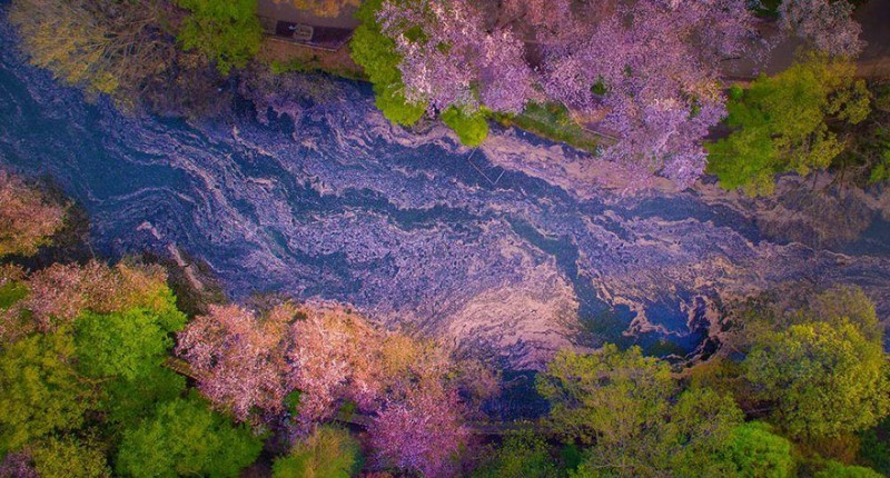 stunning-beautiful-sakura-cherry-blossom-drone-photography-japan-spring-pictures (2)