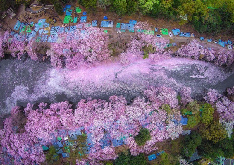 stunning-beautiful-sakura-cherry-blossom-drone-photography-japan-spring-pictures (6)