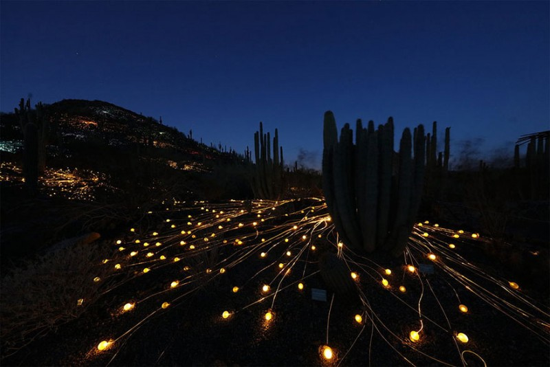 surreal-art-installation-light-field-australia-desert (8)