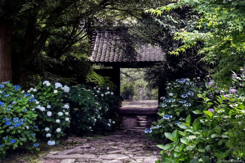 beautiful-photographs-Japans-rainy-season-like-paitnings (10)