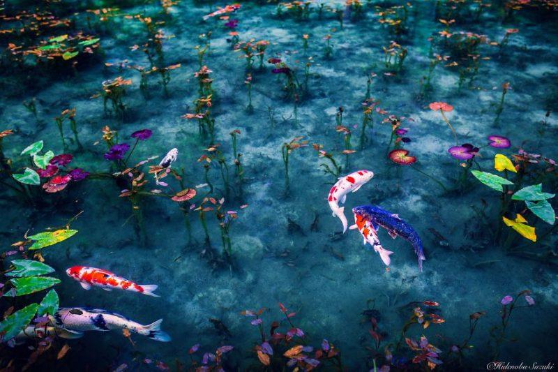 beautiful-photographs-Japans-rainy-season-like-paitnings (9)