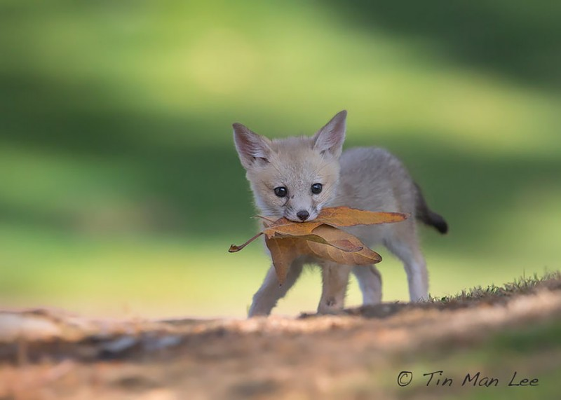cute-baby-foxes-pictures (8)