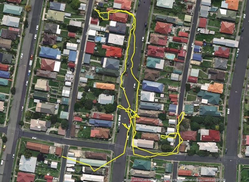 research-gps-tracker-show-cat-movement-map (2)