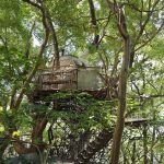The largest treehouse in Japan