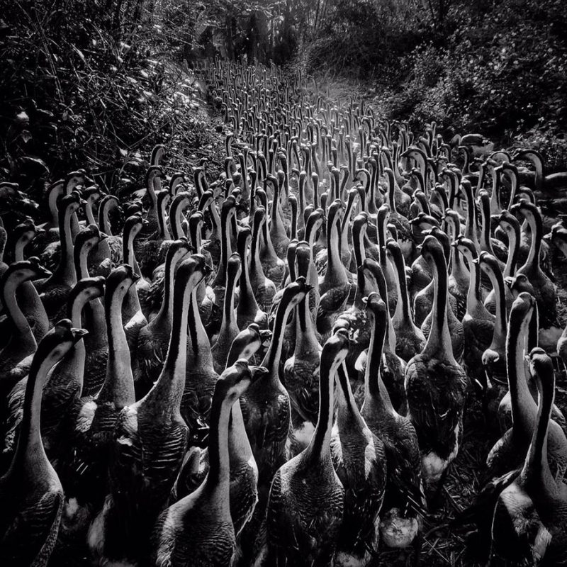 Winners-2016-iPhone-Photography-Awards-IPPAWARDS-best-photos (2)