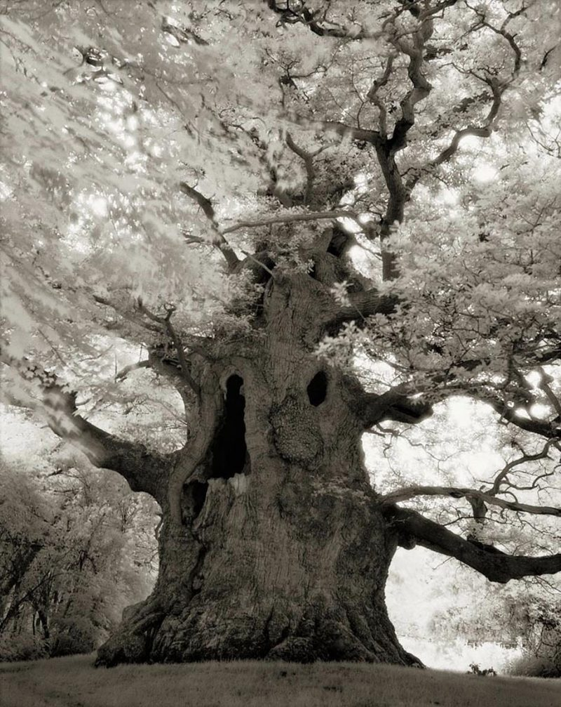ancient-worlds-oldest-trees-photographs-beautiful-nature-photography (10)