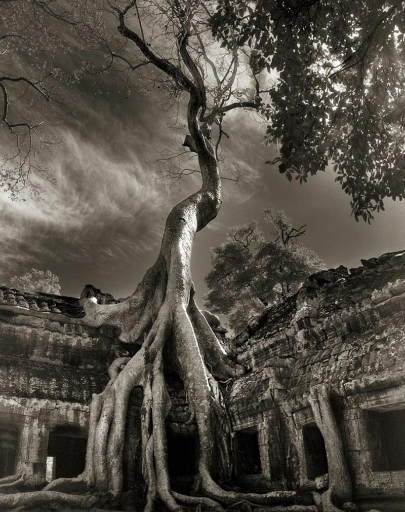 ancient-worlds-oldest-trees-photographs-beautiful-nature-photography (11)