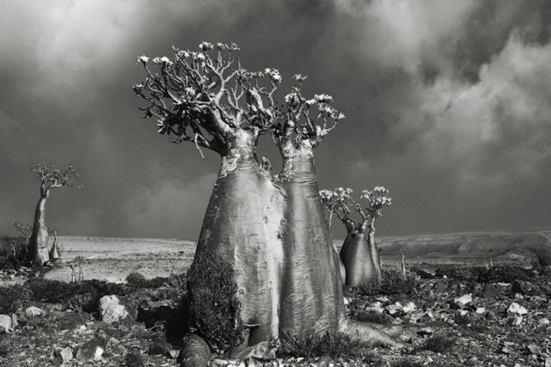ancient-worlds-oldest-trees-photographs-beautiful-nature-photography (15)