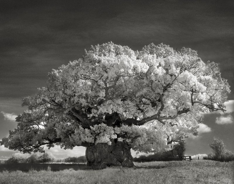 ancient-worlds-oldest-trees-photographs-beautiful-nature-photography (17)