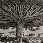 Wildlife photographer has been traveling over 15 years to document these oldest trees around the world