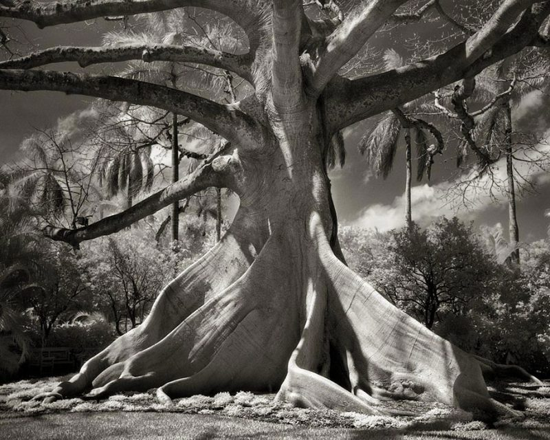 ancient-worlds-oldest-trees-photographs-beautiful-nature-photography (2)