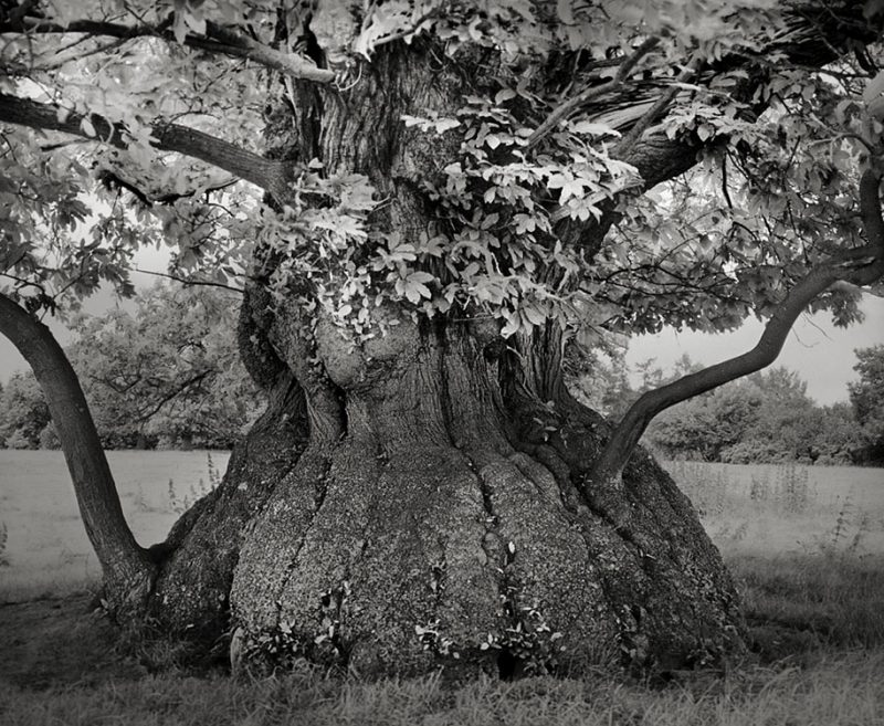 ancient-worlds-oldest-trees-photographs-beautiful-nature-photography (20)