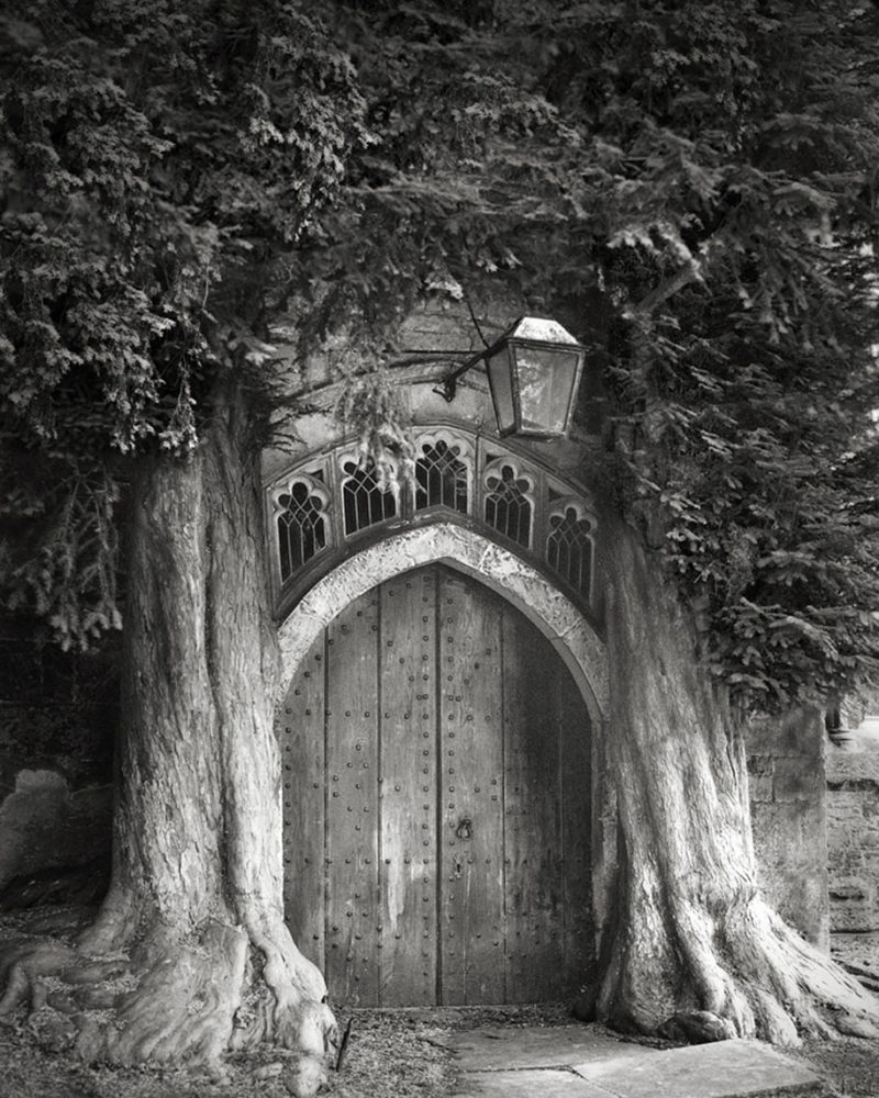 ancient-worlds-oldest-trees-photographs-beautiful-nature-photography (5)