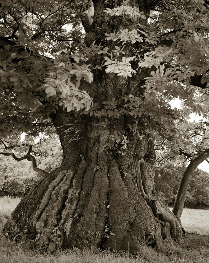ancient-worlds-oldest-trees-photographs-beautiful-nature-photography (6)