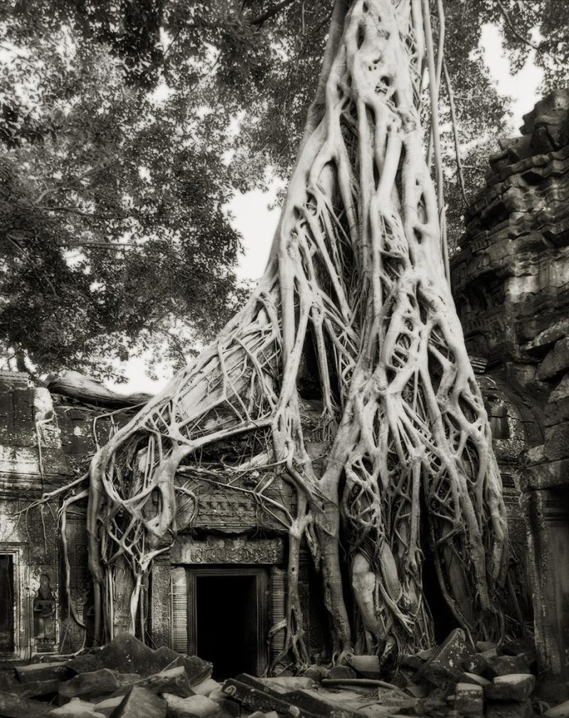 ancient-worlds-oldest-trees-photographs-beautiful-nature-photography (7)