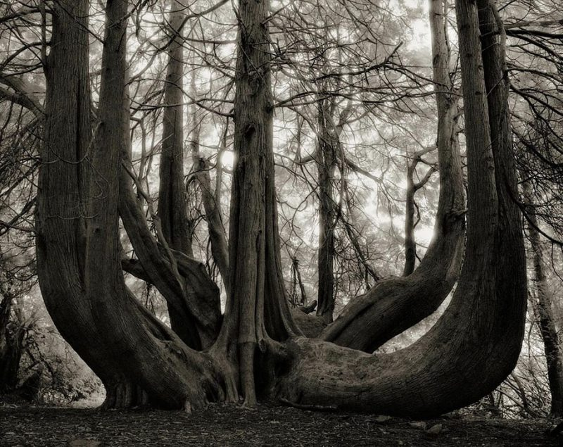ancient-worlds-oldest-trees-photographs-beautiful-nature-photography (8)