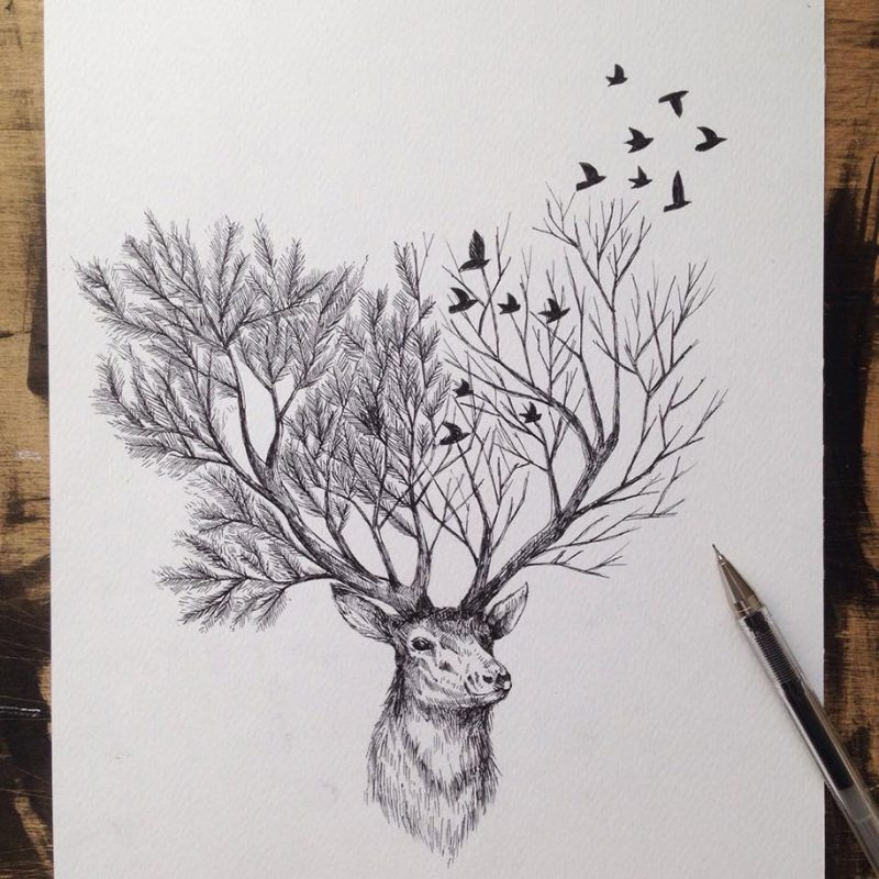 beautiful-pen-ink-animal-trees-illustrations-nature-drawings (1)