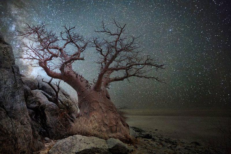 beautiful-photos-worlds-oldest-trees-starlight-diamond-nights (1)