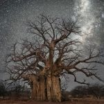 Spectacular photographs of ancient trees against starlit sky