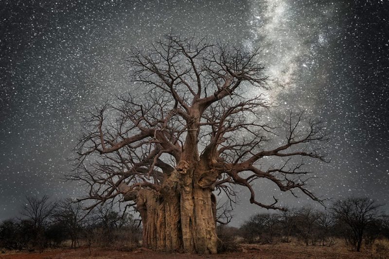 beautiful-photos-worlds-oldest-trees-starlight-diamond-nights (10)