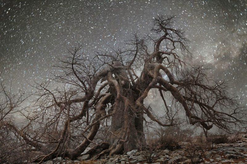 beautiful-photos-worlds-oldest-trees-starlight-diamond-nights (11)