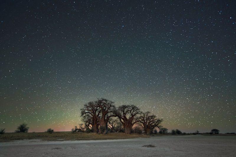 beautiful-photos-worlds-oldest-trees-starlight-diamond-nights (3)