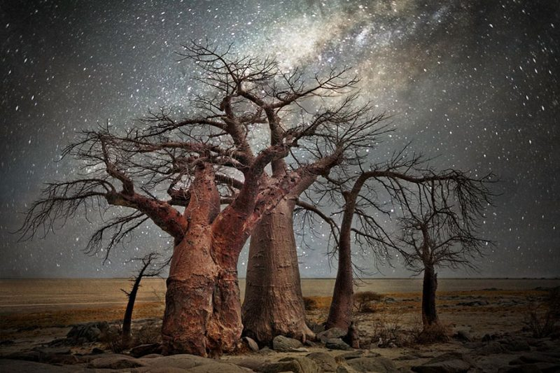 beautiful-photos-worlds-oldest-trees-starlight-diamond-nights (4)