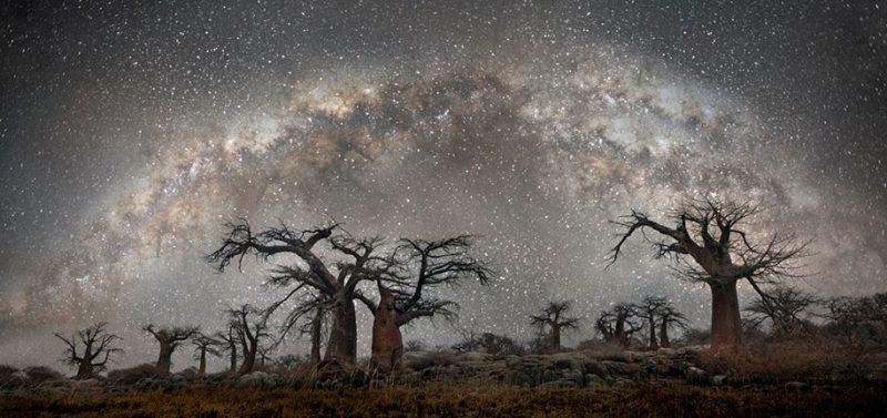 beautiful-photos-worlds-oldest-trees-starlight-diamond-nights (5)