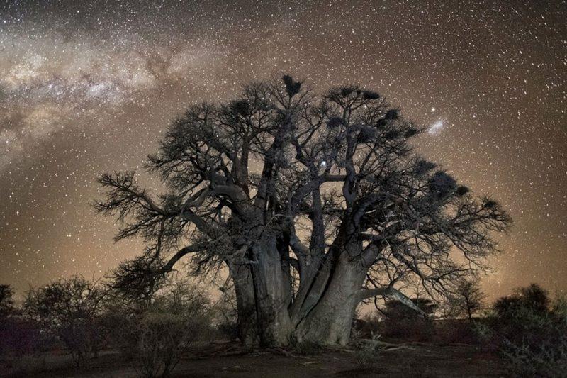 beautiful-photos-worlds-oldest-trees-starlight-diamond-nights (6)
