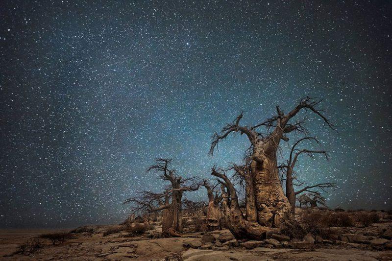beautiful-photos-worlds-oldest-trees-starlight-diamond-nights (7)