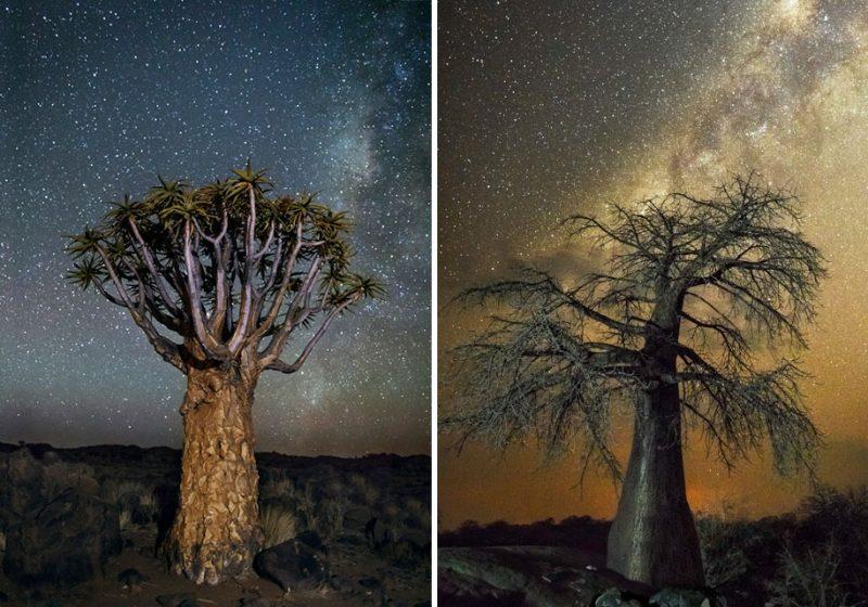 beautiful-photos-worlds-oldest-trees-starlight-diamond-nights (8)