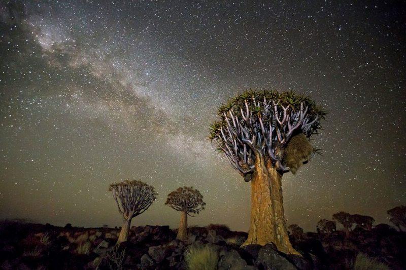 beautiful-photos-worlds-oldest-trees-starlight-diamond-nights (9)
