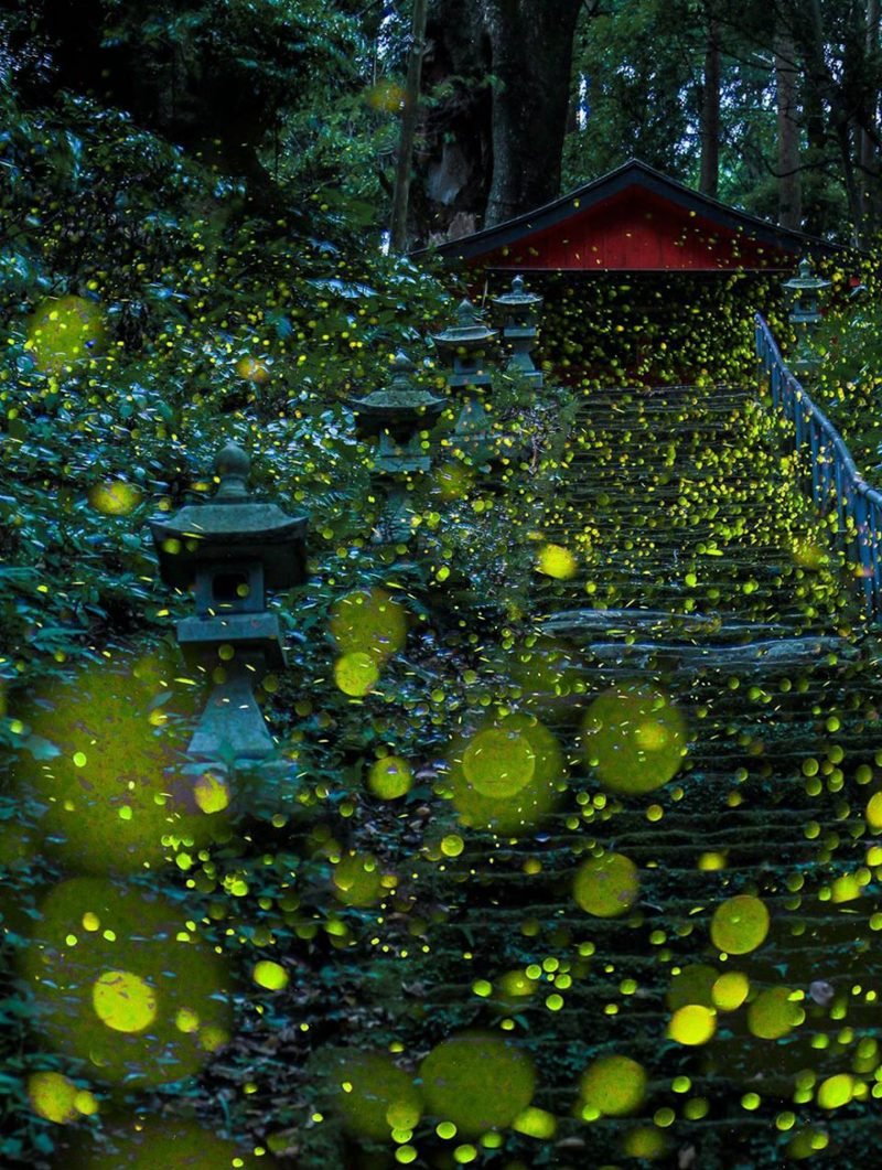 beautiful-pictures-of-fireflies-long-exposure-photography-japan (1)