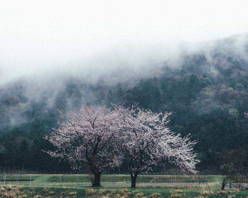 japanese-photographer-street-photographpy-kyoto-japan (11)