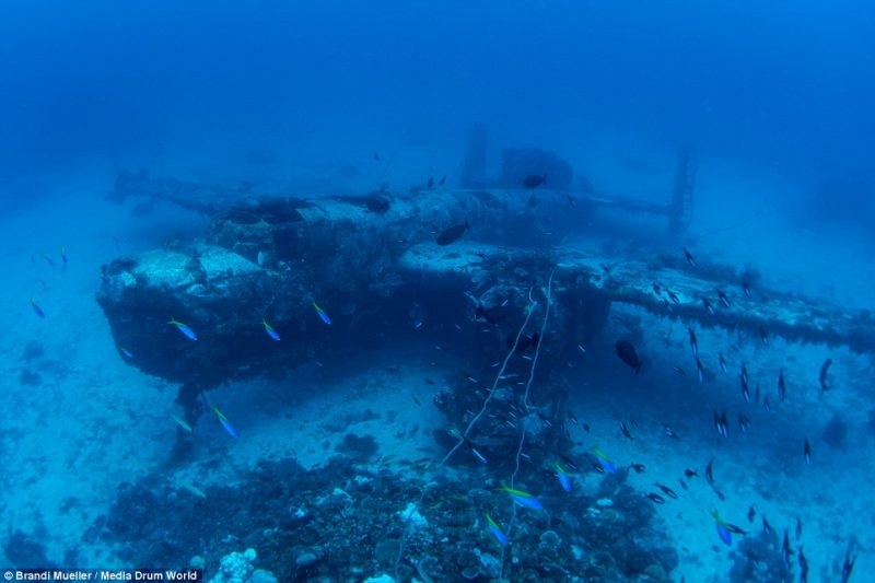 underwater-plane-graveyard-World-War-Two-fighters-photography (1)