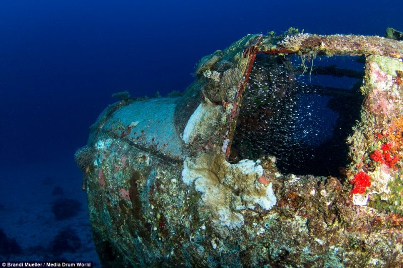 underwater-plane-graveyard-World-War-Two-fighters-photography (3)