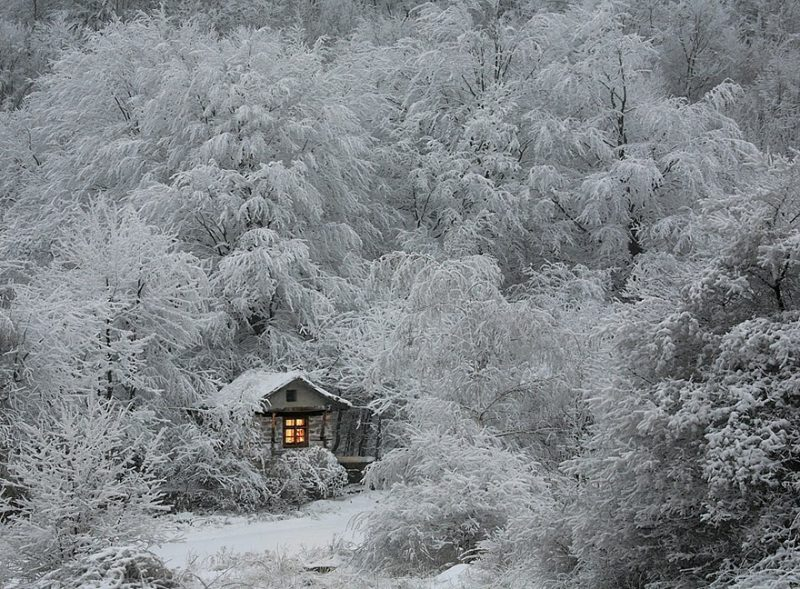 beautiful-cozy-cabins-in-the-woods (1)