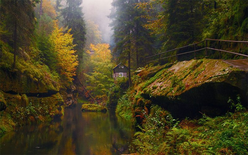 beautiful-cozy-cabins-in-the-woods (6)