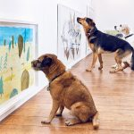 Play More – World's First Interactive Art Exhibition For Dogs