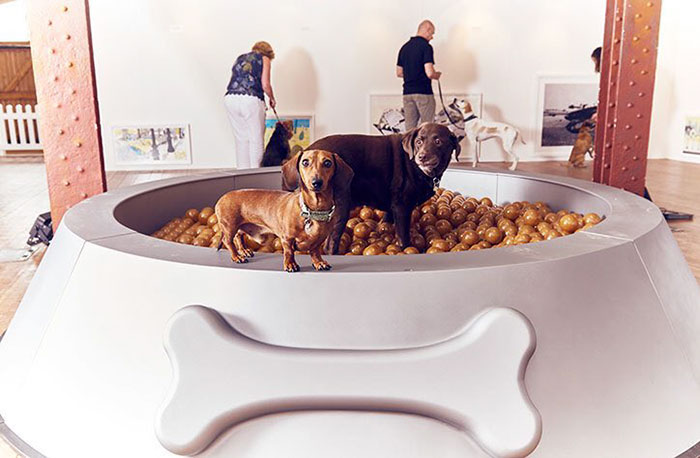 fun-world-first-dog-art-exhibition-installations (3)