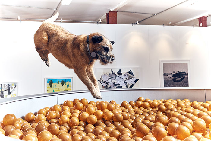fun-world-first-dog-art-exhibition-installations (4)