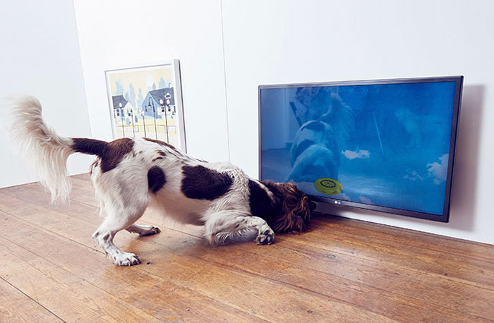 fun-world-first-dog-art-exhibition-installations (5)