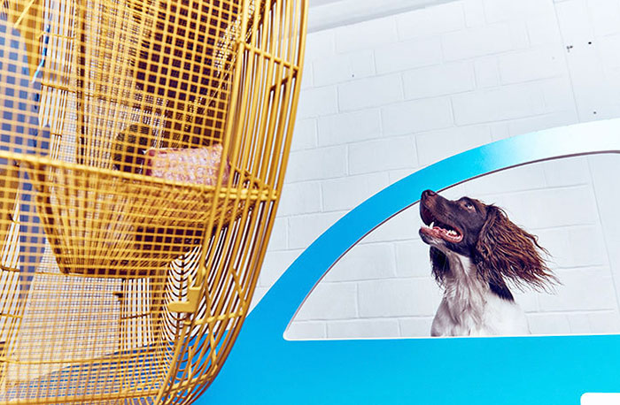 fun-world-first-dog-art-exhibition-installations (8)