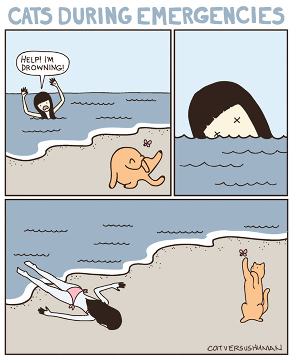 funny-comics-cat-vs-human-illustrations (6)