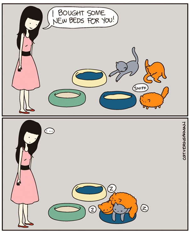 funny-comics-cat-vs-human-illustrations (8)